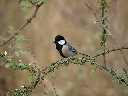 birding in udaipur or near udaipur